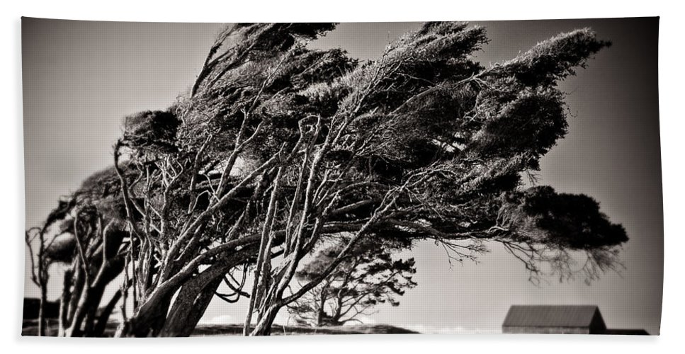 Windswept Trees Beach Sheet featuring the photograph Windswept by Dave Bowman