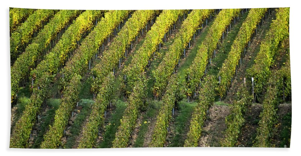 Heiko Beach Towel featuring the photograph Wine Acreage In Germany by Heiko Koehrer-Wagner