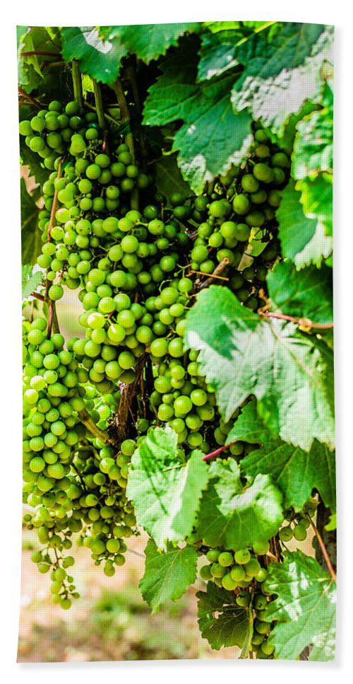 Wine Beach Towel featuring the photograph Wine Grapes by David Morefield