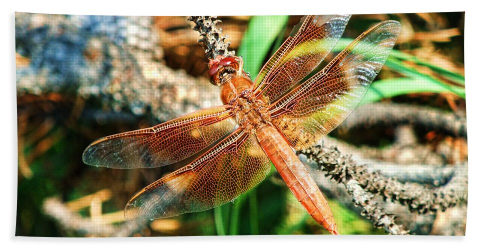 Wings Beach Towel featuring the photograph Winged Wonder by Sylvia Thornton