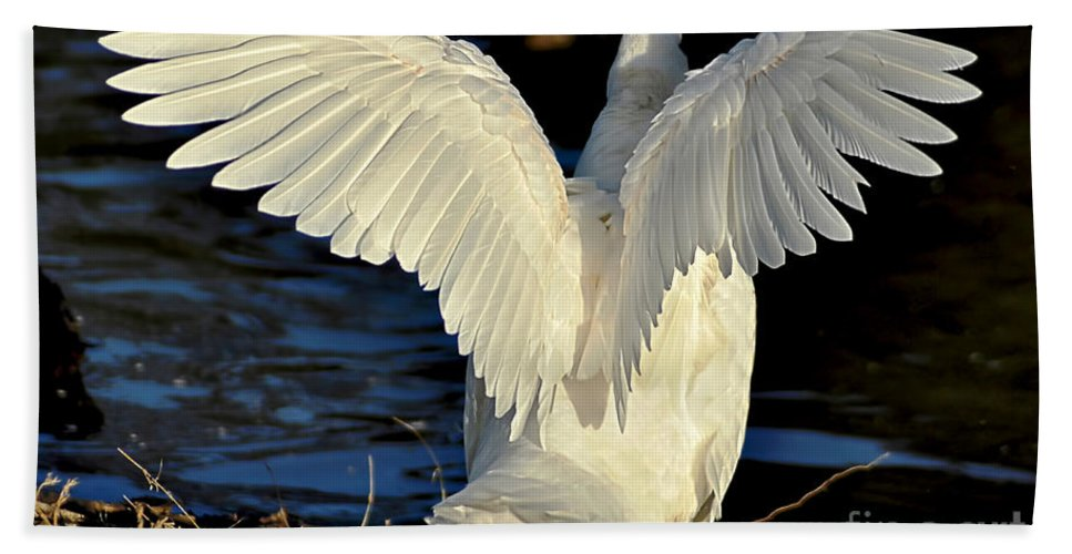 Photography Beach Towel featuring the photograph Wings Of A White Duck by Kaye Menner