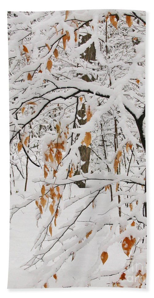 Winter Beach Towel featuring the photograph Winter Branches by Ann Horn