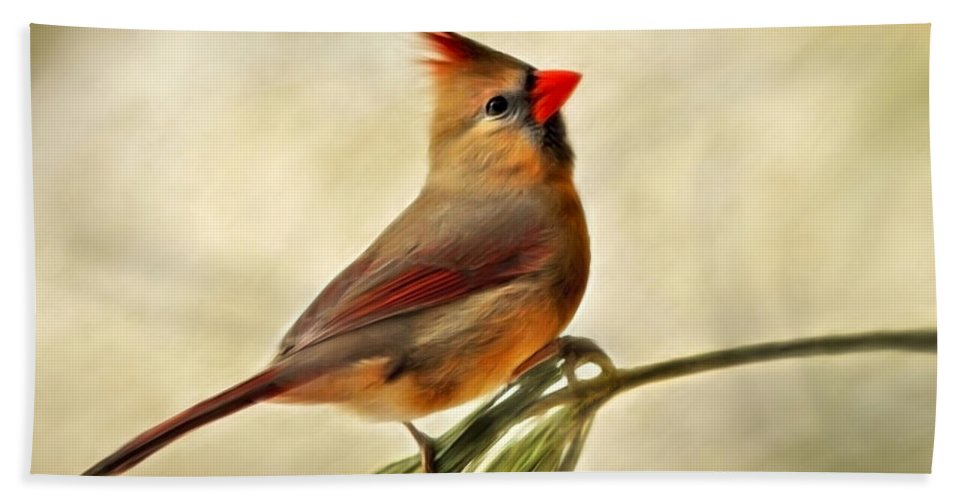 Winter Beach Towel featuring the mixed media Winter Cardinal by Christina Rollo