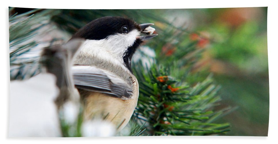 Bird Beach Towel featuring the photograph Winter Chickadee With Seed by Christina Rollo