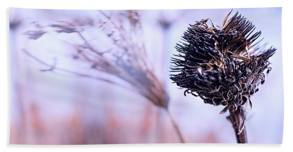 Flowers Beach Towel featuring the photograph Winter Flowers by Bob Orsillo