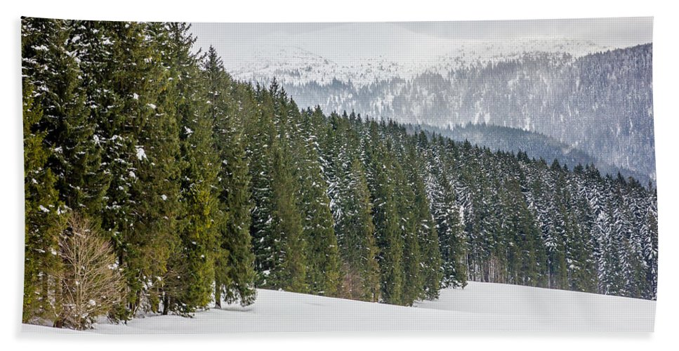 Forest Beach Towel featuring the photograph Winter Forest by Pati Photography