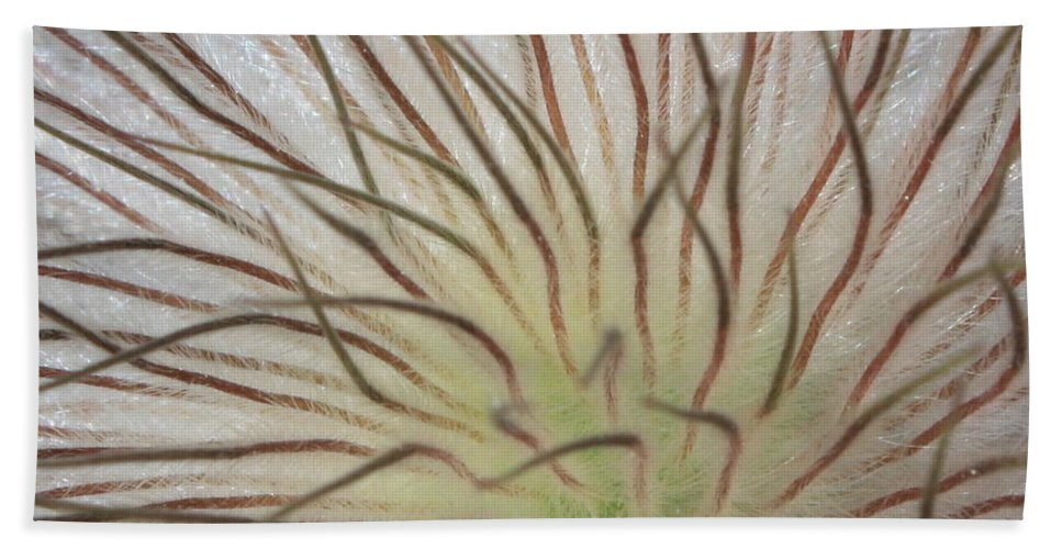 Pasque Flower Beach Towel featuring the photograph Winter Pasque Flower by Carol Groenen