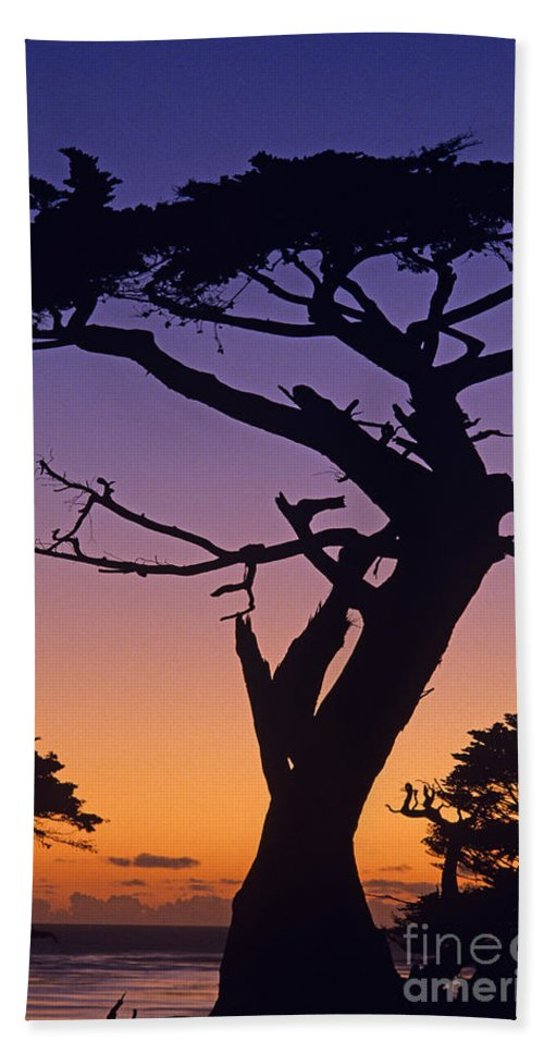 Landscape Beach Towel featuring the photograph Witch Tree Monterey California by Jim Corwin
