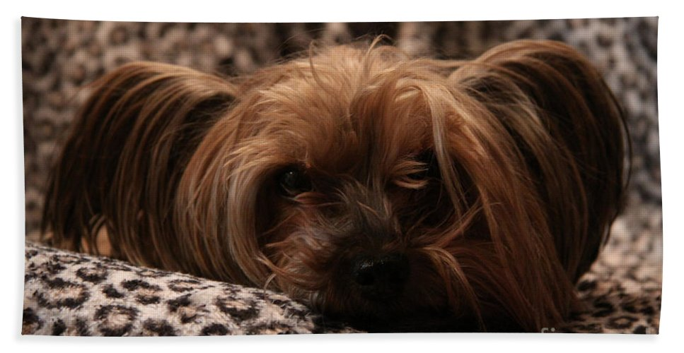 Dog Beach Towel featuring the photograph Woe Is Me by Alyce Taylor