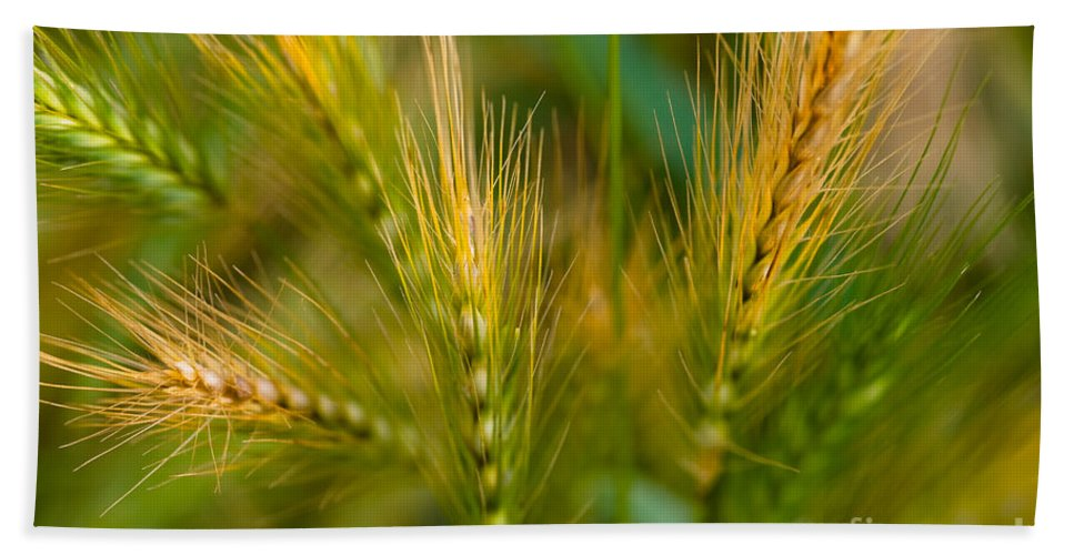 Plant Beach Towel featuring the photograph Wonderous Wild Wheat by Venetta Archer