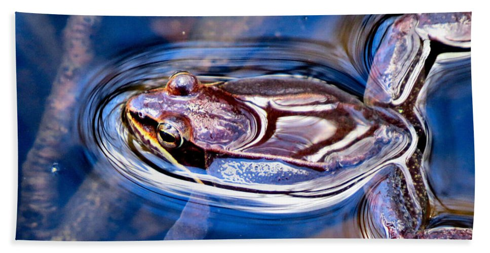 Wood Beach Towel featuring the photograph Wood Frog Float by Art Dingo