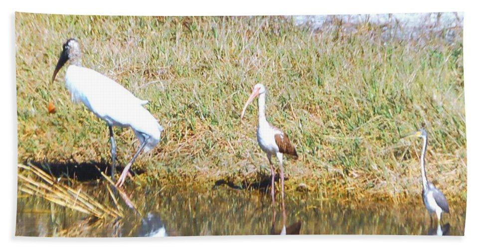North Ft.myers Beach Towel featuring the photograph Wood Stork And Ibis And Heron by Robert Floyd