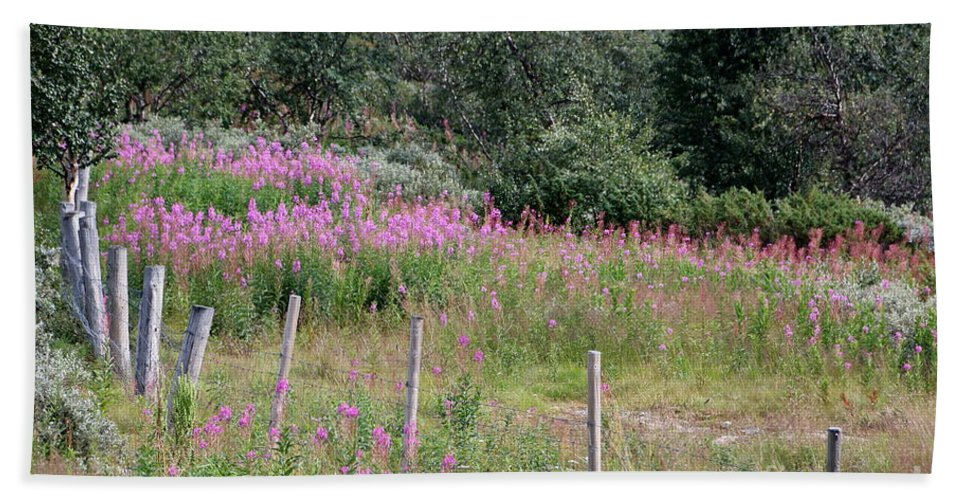 Fireweed Beach Towel featuring the photograph Wooden Fence And Pink Fireweed In Norway by Amanda Mohler