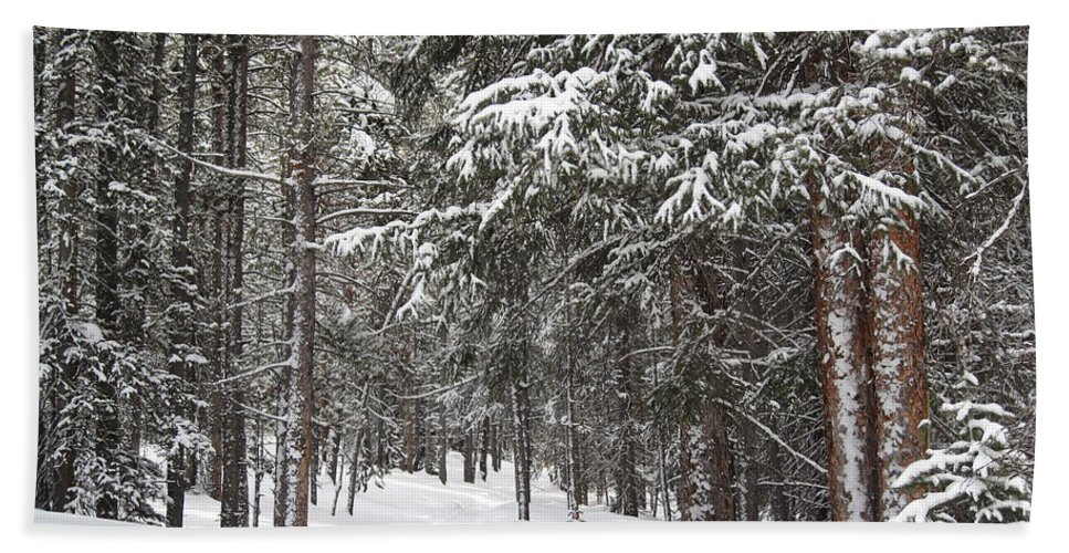 Forest Beach Towel featuring the photograph Woods In Winter by Eric Glaser