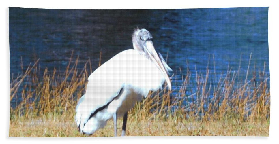 Resting On His Knees At Lakes Park In Ft.myers Beach Towel featuring the photograph Wordstork by Robert Floyd