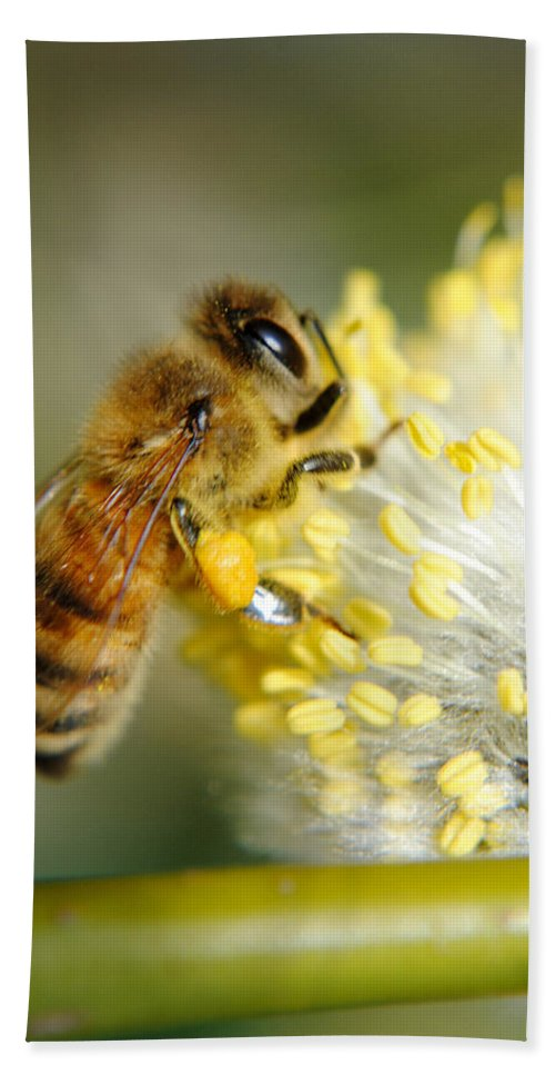 Bee Beach Towel featuring the photograph Worker Bee by Frozen in Time Fine Art Photography