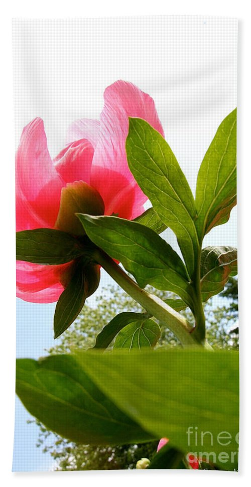 Flower Beach Towel featuring the photograph Worm's Eye View by Susan Herber