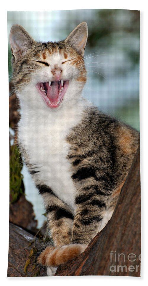 Cat Beach Towel featuring the photograph Yawning Cat by George Atsametakis