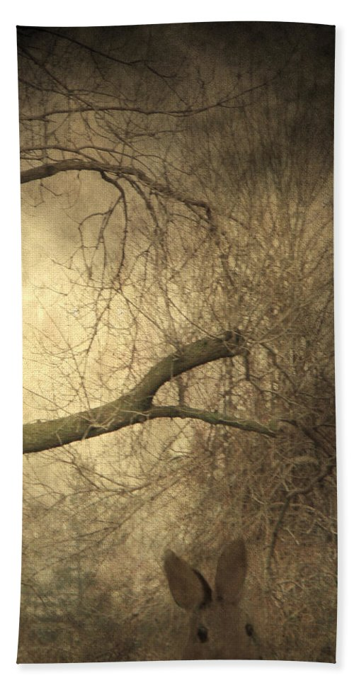 Forest Beach Towel featuring the photograph Year Of The Rabbit by Gothicrow Images