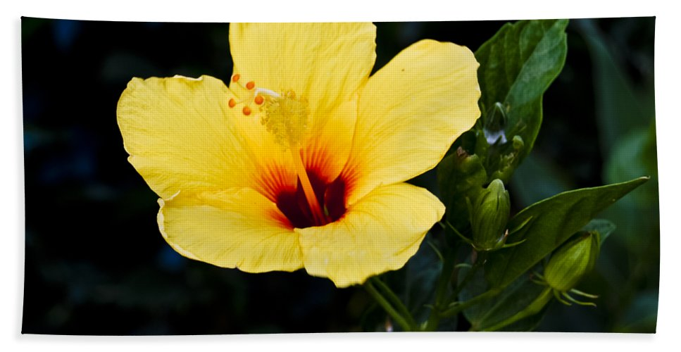 Big Island Beach Towel featuring the photograph Yellow And Red Hibiscus by Christi Kraft