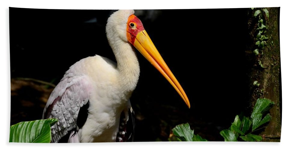 Singapore Beach Towel featuring the photograph Yellow Billed Stork Peers At Camera by Imran Ahmed