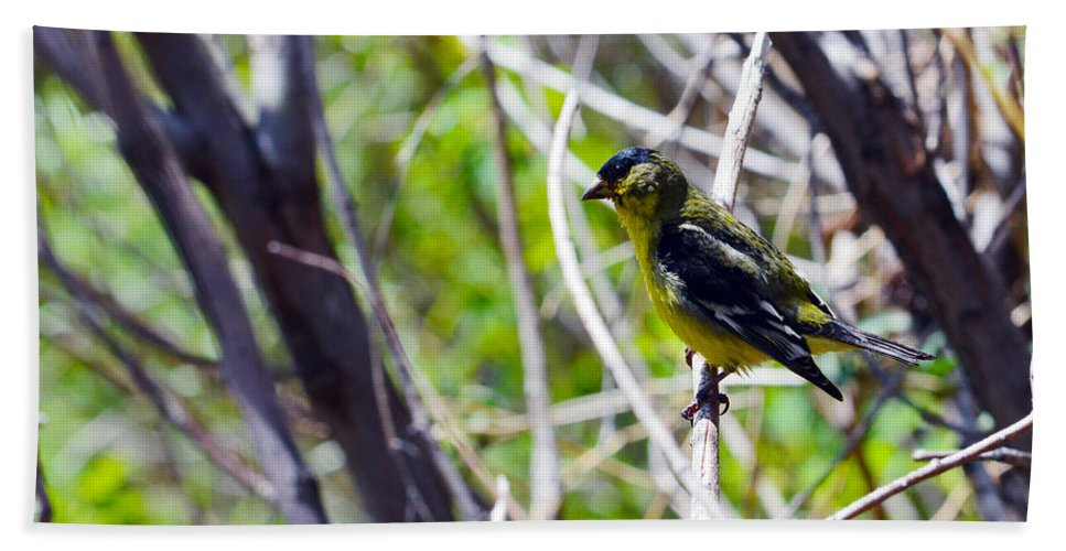 Bird Beach Towel featuring the photograph Yellow Bird by Brent Dolliver