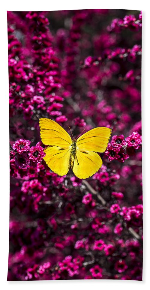 Evergreen Beach Towel featuring the photograph Yellow Butterfly On Red Flowering Bush by Garry Gay