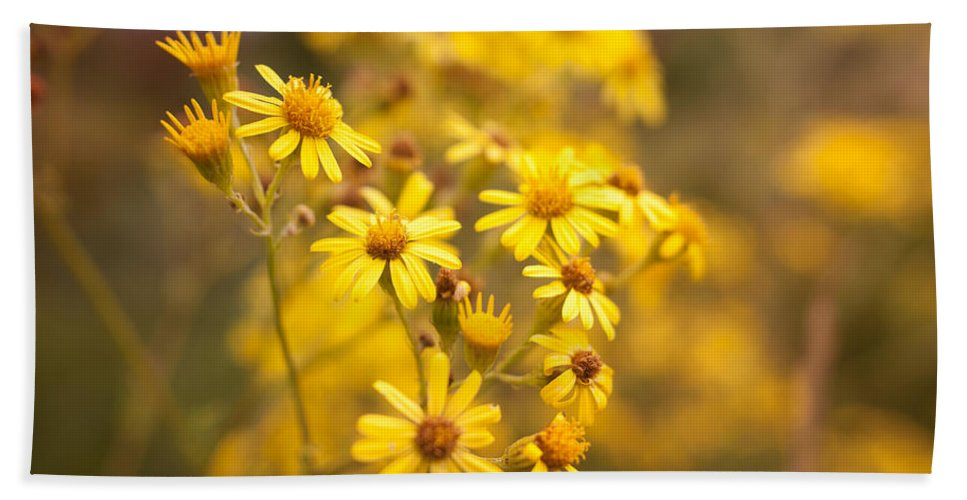 Country Beach Towel featuring the photograph Yellow Countryside by Miguel Winterpacht