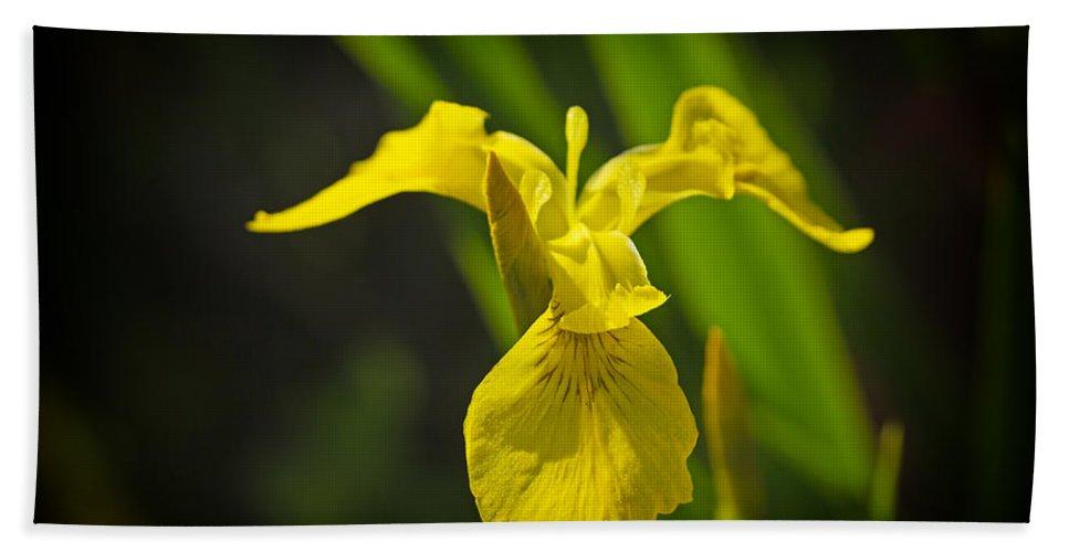 Iris Beach Towel featuring the photograph Yellow Flag Flower Outdoors by Jaroslav Frank