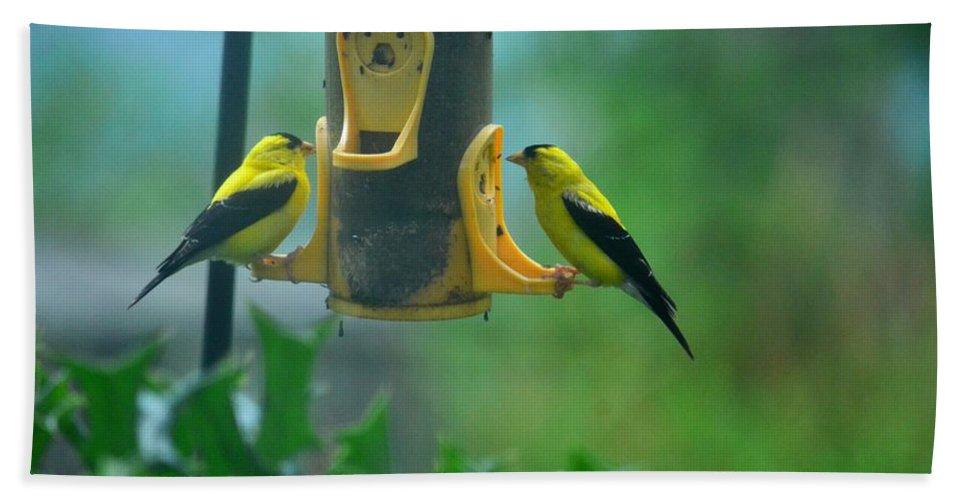 Yellow Grosbeak Duo Beach Towel featuring the photograph Yellow Grosbeak Duo by Maria Urso