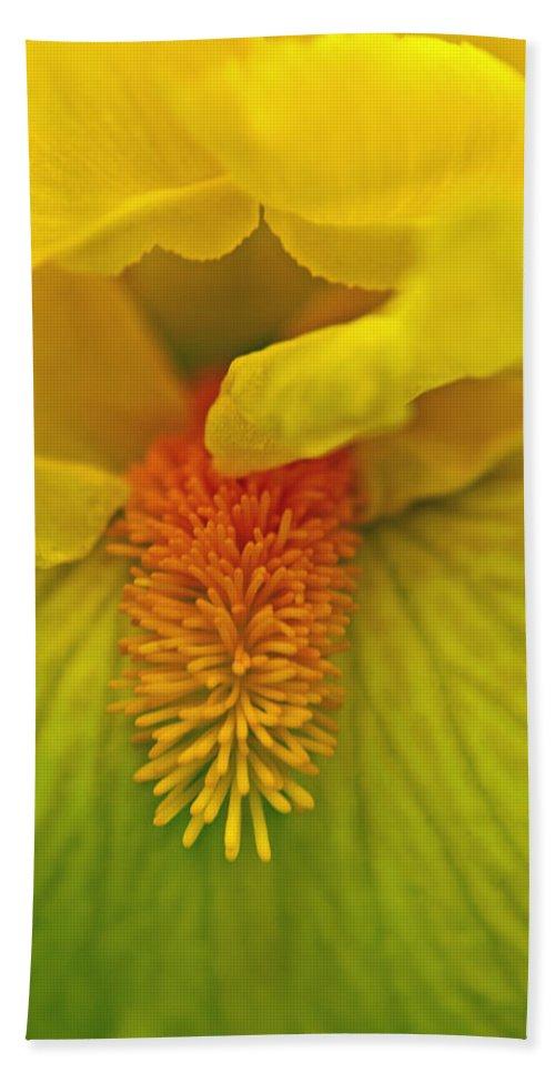 Iris Beach Towel featuring the photograph Yellow Iris Beard by Tikvah's Hope