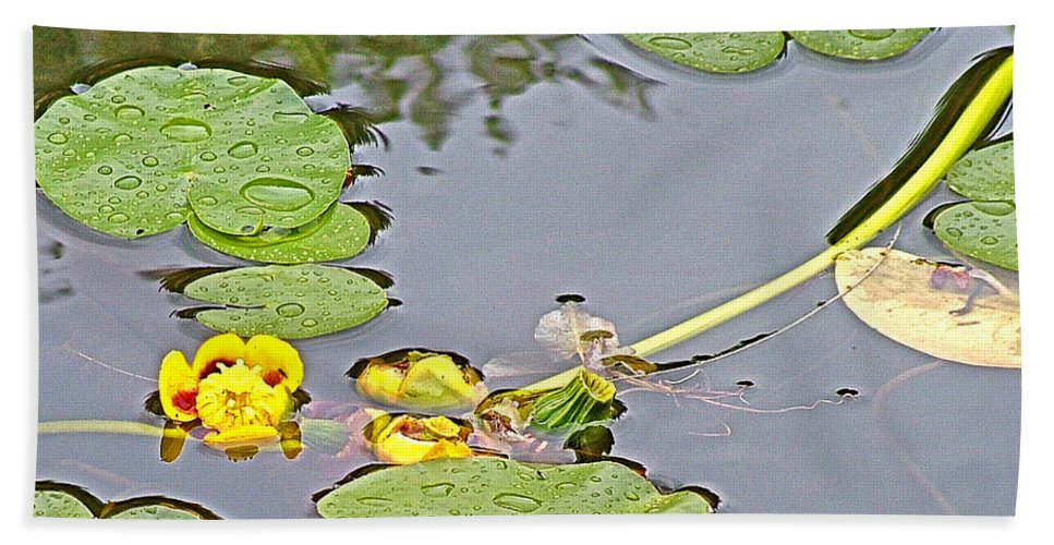 Yellow Pond Lilies On Lake Yellowhead Along Yellowhead Highway Beach Towel featuring the photograph Yellow Pond Lilies On Lake Yellowhead Along Yellowhead Highway-b by Ruth Hager