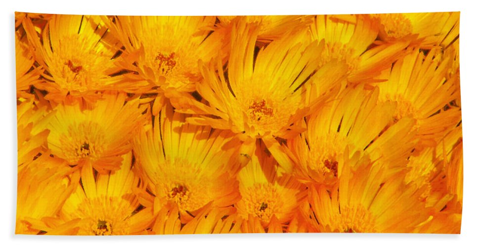 Argyranthemum Beach Towel featuring the photograph Yellow Radiance by Stephen Edwards