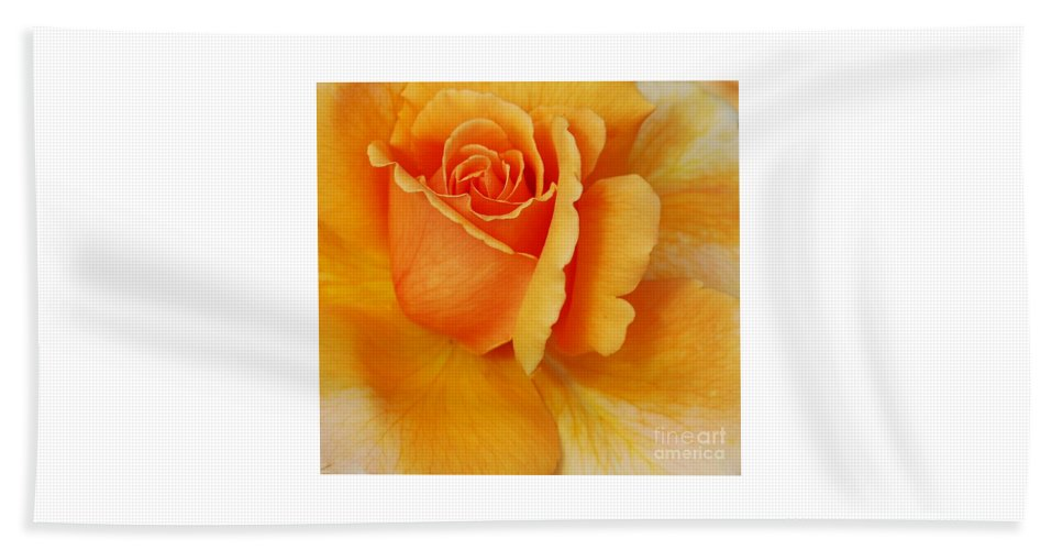 Yellow Beach Towel featuring the photograph Yellow Rose by Kathleen Struckle