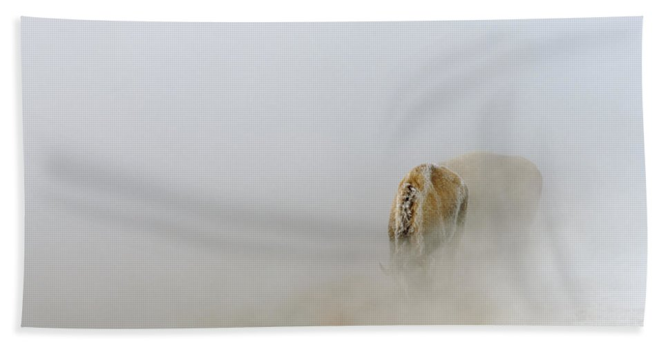 Wyoming Beach Towel featuring the photograph Yellowstone Bison by Ed Riche