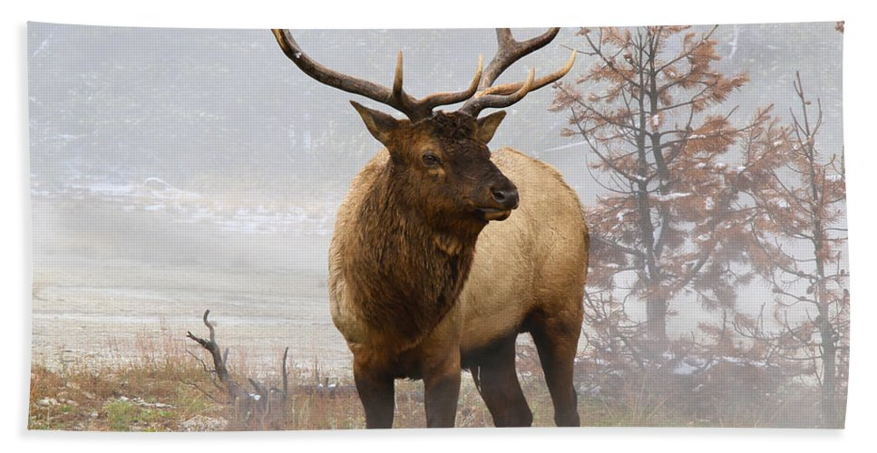 National Park Beach Towel featuring the photograph Yellowstone Bull Elk by Ed Riche