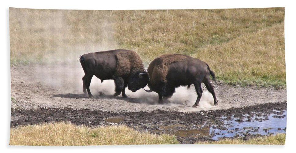 Yellowstone Turf War Beach Towel featuring the photograph Yellowstone Turf War by Wes and Dotty Weber