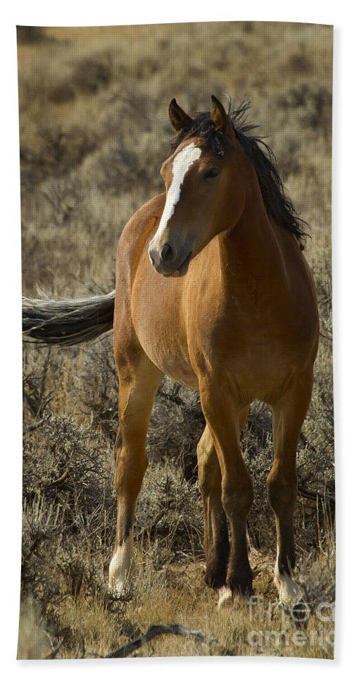 Horse Beach Towel featuring the photograph Young Wild Mare  #0307 by J L Woody Wooden