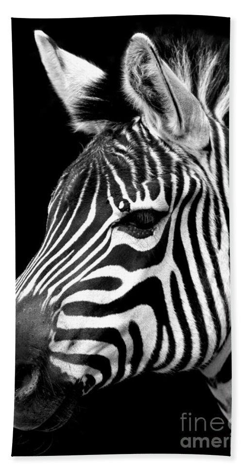 Horse Beach Towel featuring the photograph Zebra by Gunnar Orn Arnason