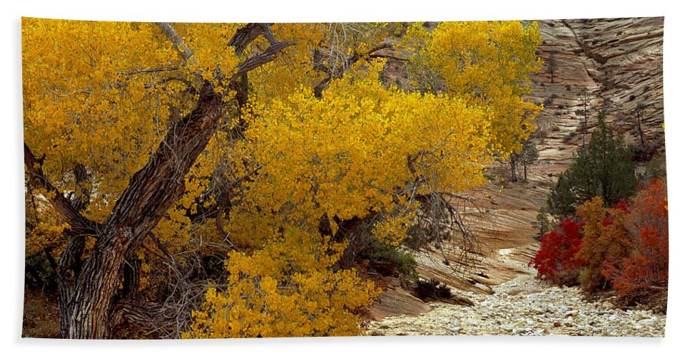 Autumn Beach Towel featuring the photograph Zion National Park Autumn by Leland D Howard