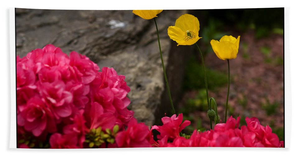 Flowers Beach Towel featuring the photograph Spring by Beverly Cash