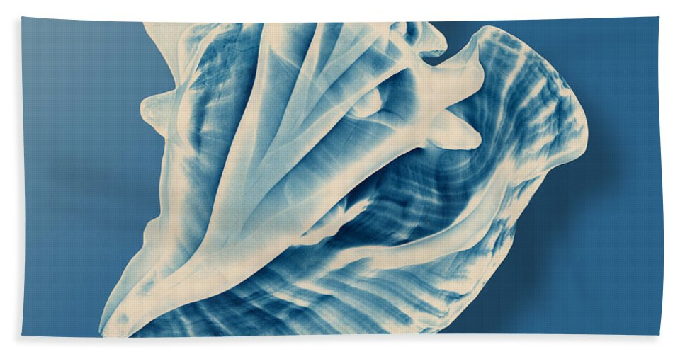 Conch Beach Towel featuring the photograph X-ray Of A Conch Shell by Mark Greenberg