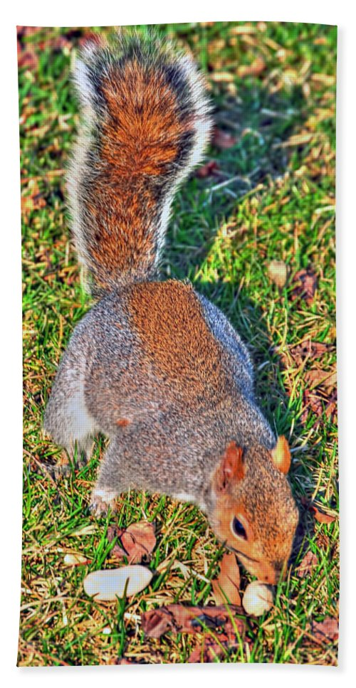 Beach Towel featuring the photograph 08 Grey Squirrel Sciurus Carolinensis Series by Michael Frank Jr