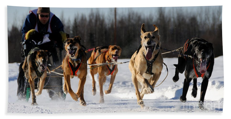 Sled Dogs Beach Towel featuring the photograph 2011 Limited North American Sled Dog Race by Gary Whitton