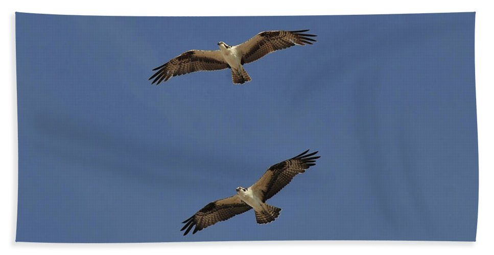 Wildlife Photography Beach Towel featuring the photograph A Beautiful Pair by David Lee Thompson