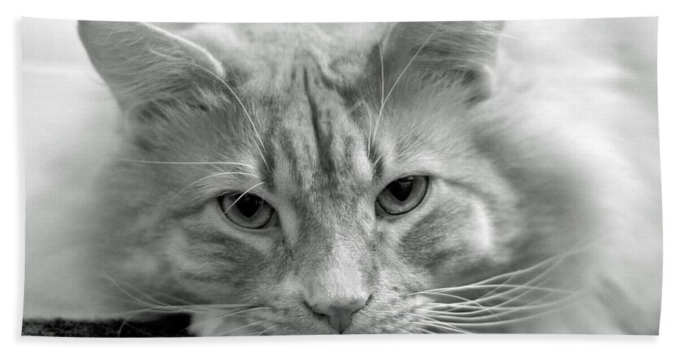 Animals Beach Towel featuring the photograph Arthur by Lisa Phillips