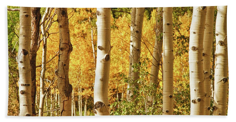 Autumn Beach Towel featuring the photograph Aspen Gold by James BO Insogna