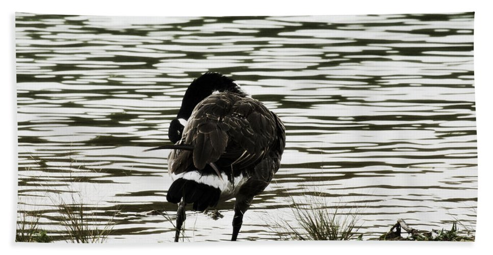 Canadian Goose Beach Towel featuring the photograph At The Waters Edge by Douglas Barnard