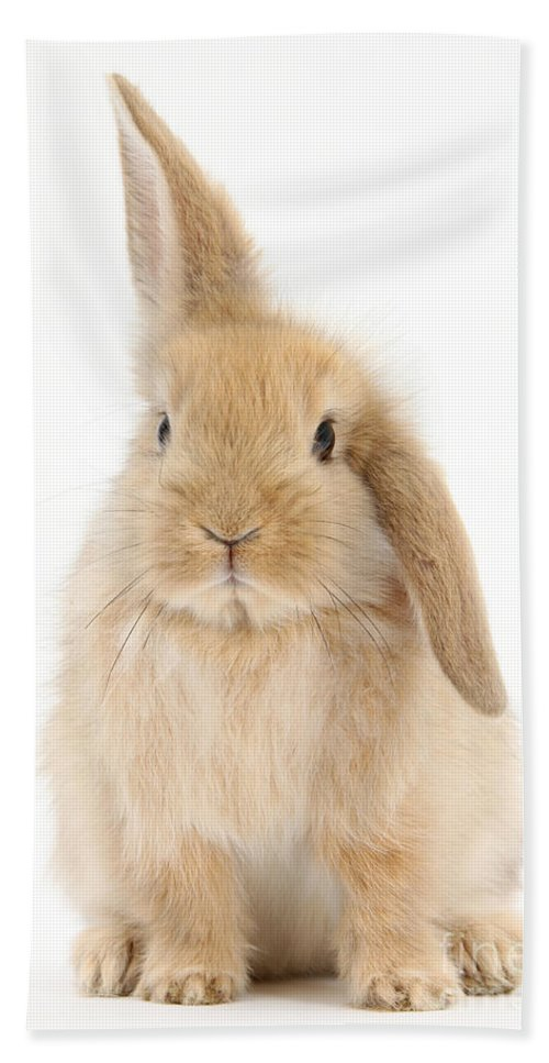 Animal Beach Towel featuring the photograph Baby Sandy Lop Rabbit by Mark Taylor