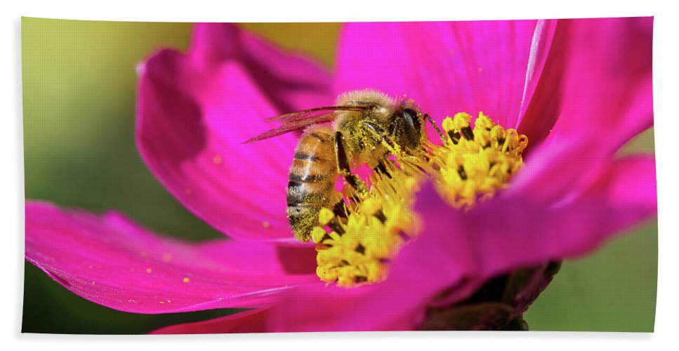 Bee Beach Towel featuring the photograph Bee On Flower by Greg Nyquist